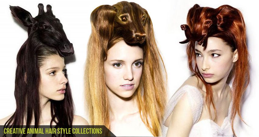 Creative Animal Hair Style Collections-Cgfrog-Banner