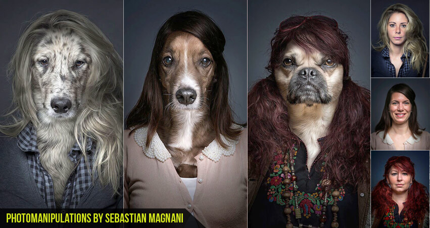 Dog Photomanipulations by Sebastian Magnani cgfrog com banner