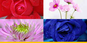 50+ Beautiful Flower Background for Your Desktop